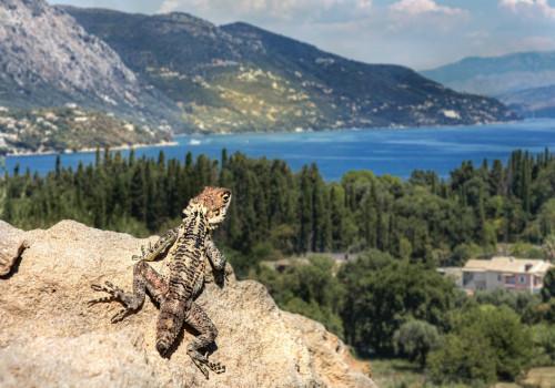 3 redenen waarom Corfu zo populair is